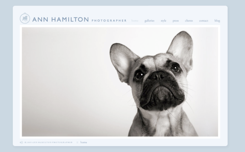 Ann Hamilton : Dog Photographer Extraordinaire