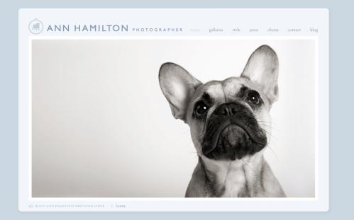 Ann Hamilton : Dog Photographer Extraordinaire